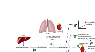 Mathematical Modeling to Improve Understanding of Diabetic Complications in the Kidneys