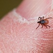 Periodic Model Predicts the Spread of Lyme Disease