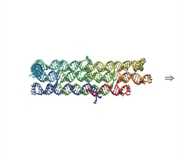 Cotranscriptional Folding: A Frontier in Molecular Engineering