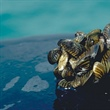 Modeling Invasive Activity: Zebra Mussels' Infiltration of North American Rivers