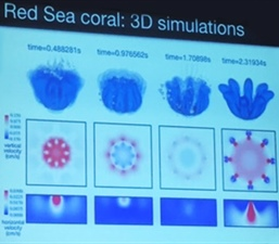 Mathematical Modeling of Pulsating Soft Corals